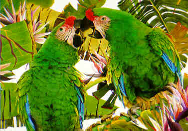 Ornitología amateur
